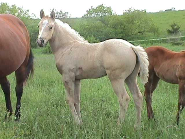 holly2002filly.jpg